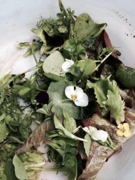 Local organic green salad