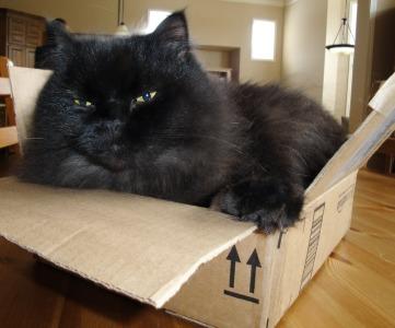Eddie inside a box